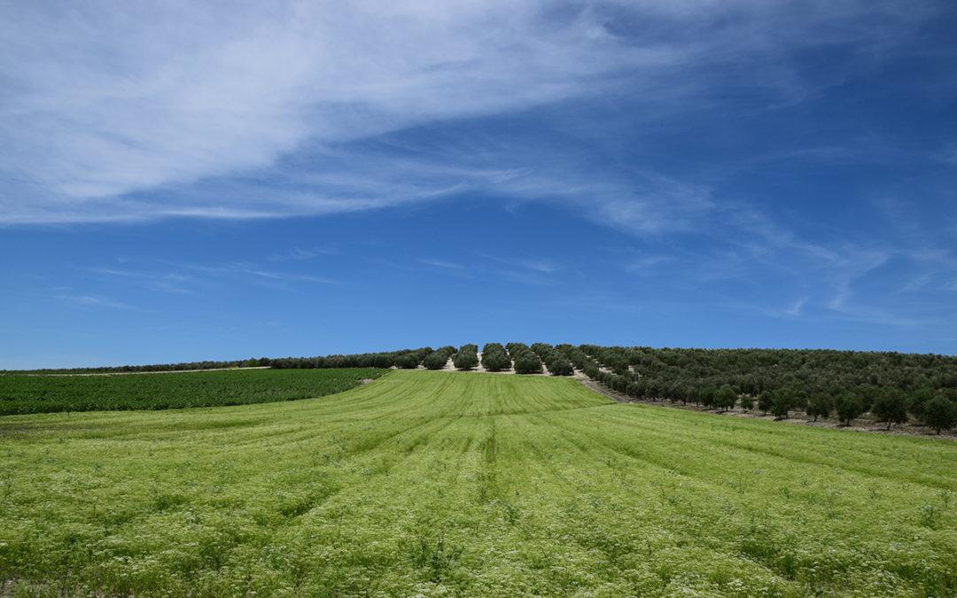 La Campiña y sus cultivos